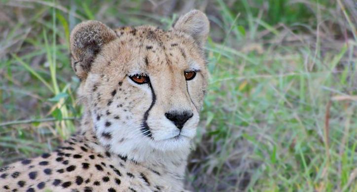 (Video) Cheetah on our doorstep…