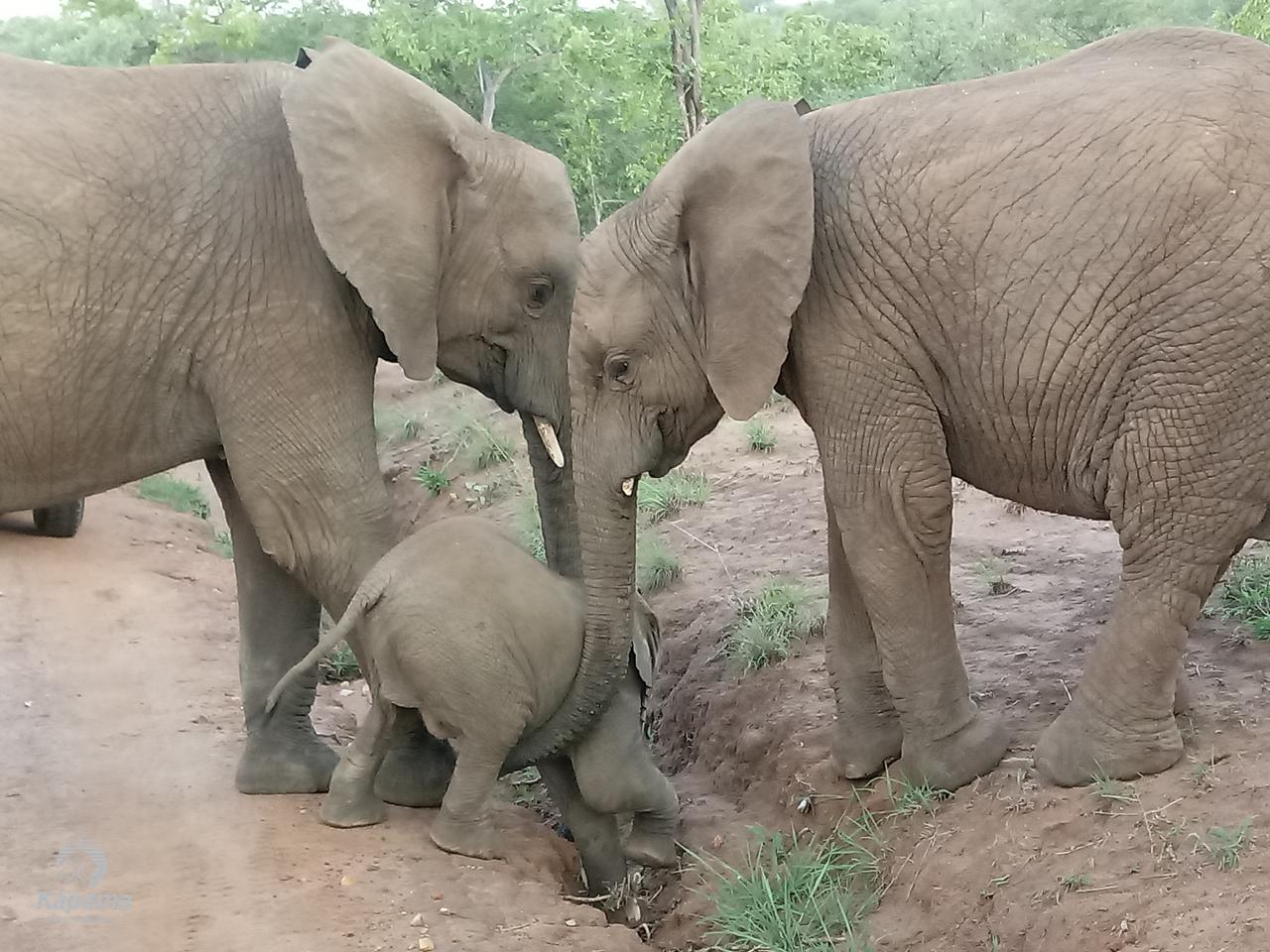 An Elephant Parade | Kapama Blog