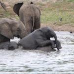 Kapama elephants big five
